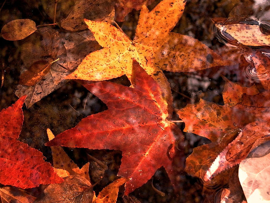Leaves Photograph - With Love - Autumn Pond by Theresa  Asher