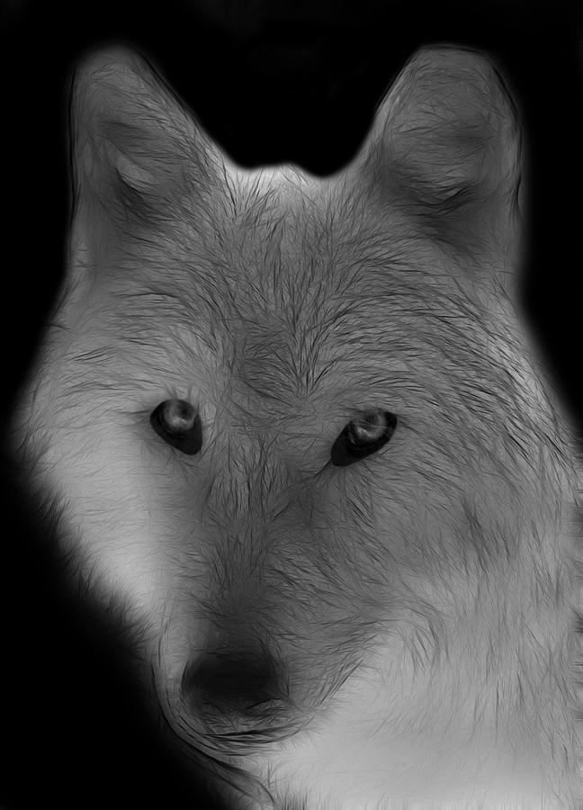 Arctic White Wolf Art ...