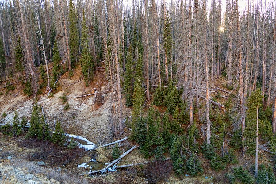 Wolf Creek Pass Forest Landscape Photograph