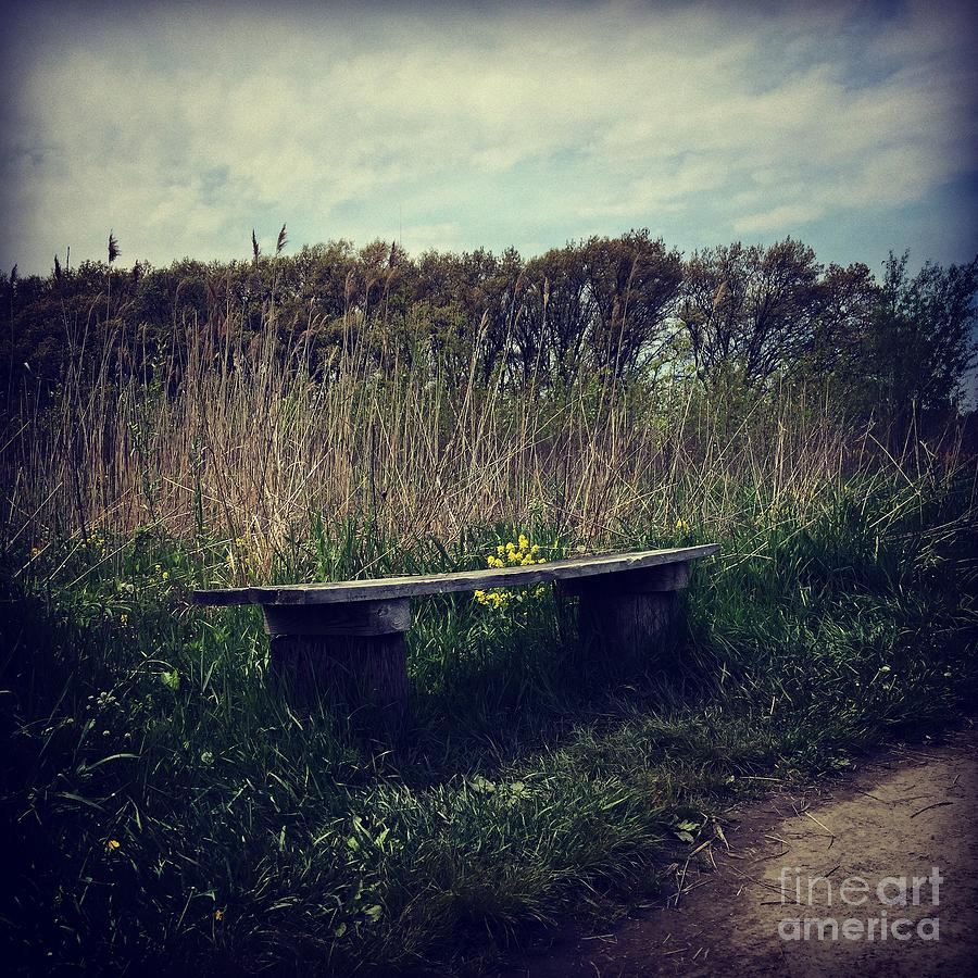 Wood Bench And Yellow Flowers Photograph
