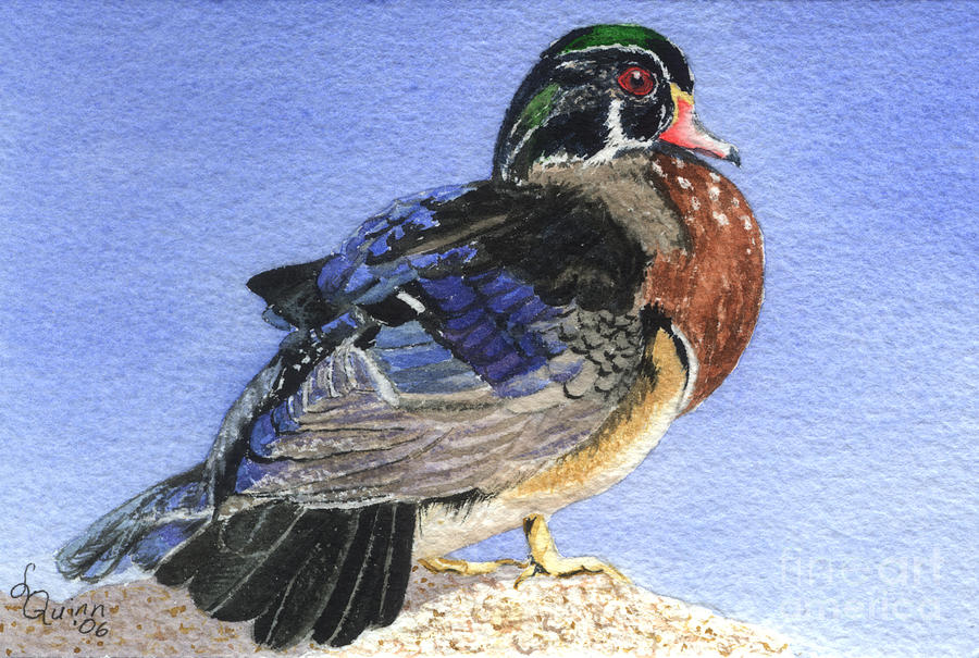 Duck Painting - Wood Duck by Lynn Quinn