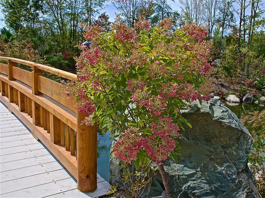 Wooden bridge in japanese garden in meijer gardens in Meijer gardens grand rapids michigan