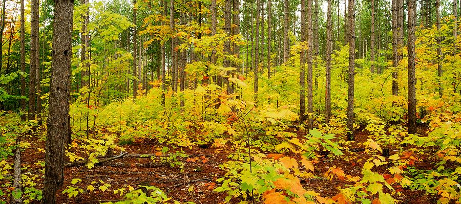 Woods Photograph - Woodland Panorama by Michael Peychich