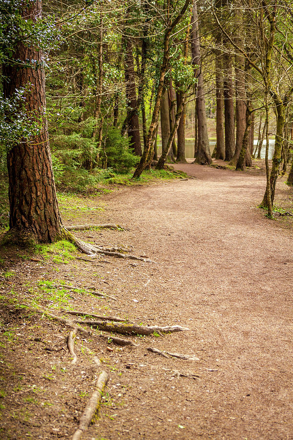 Woodland Wonder Photograph
