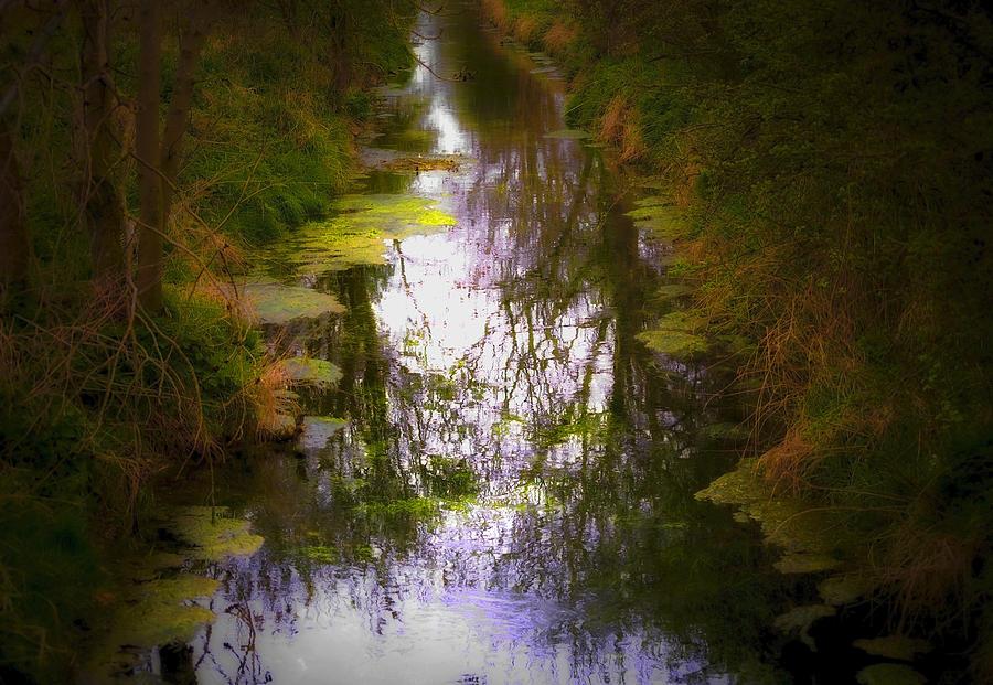 Woods Photograph