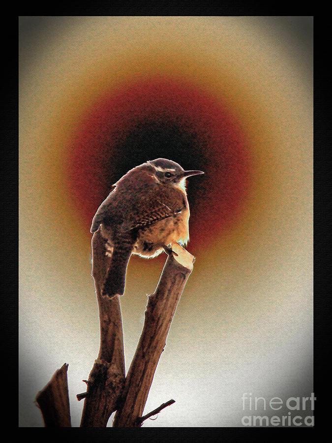 Wren Photograph - Wren At Sundown by Sue Melvin