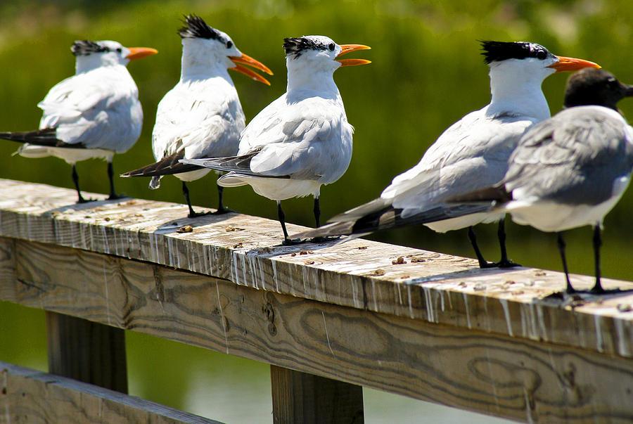 Bird Photograph - Yackety Yackety by Marilyn Hunt