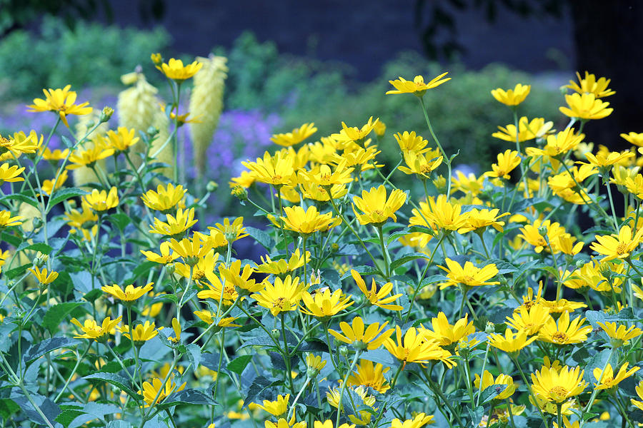 Becky Photograph - Yellow Everywhere by Becky Lodes