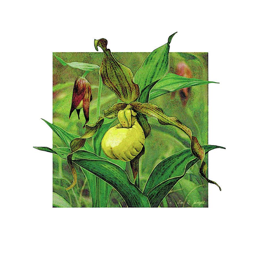 Jon Q Wright Painting - Yellow Lady Slipper by JQ Licensing