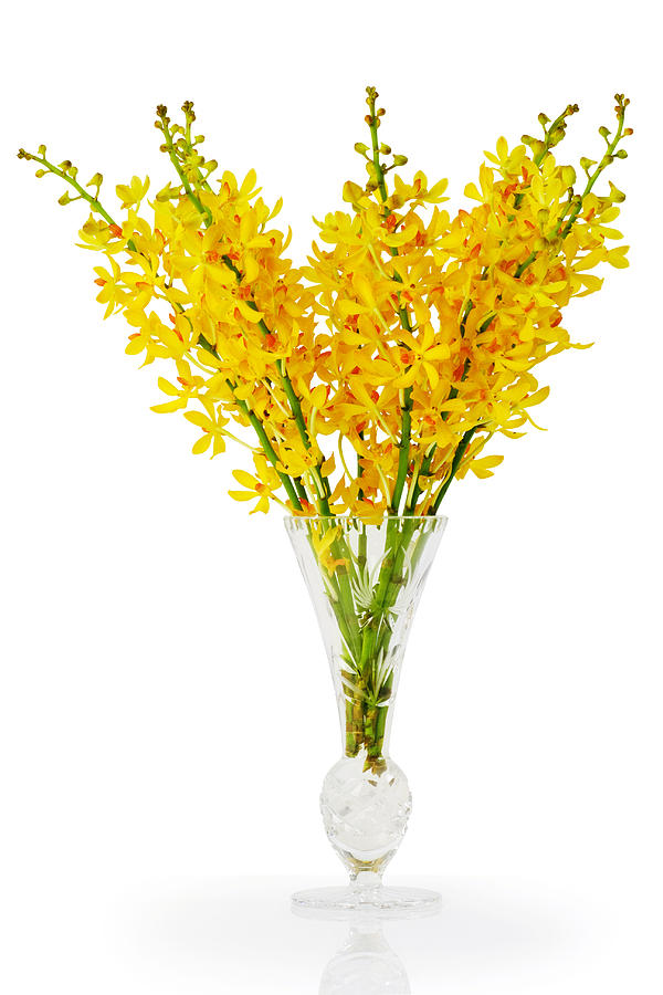Asian Photograph - Yellow Orchid In Crystal Vase by Atiketta Sangasaeng