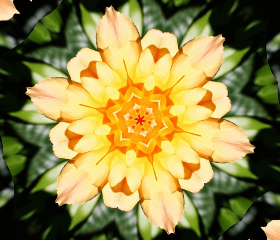 Yellow Rose Kaleidoscope  Photograph