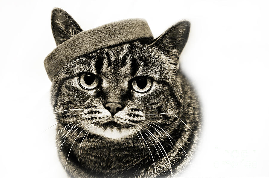 Fine Art Cat Photograph - Yes I Am Wearing A Headband by Andee Design