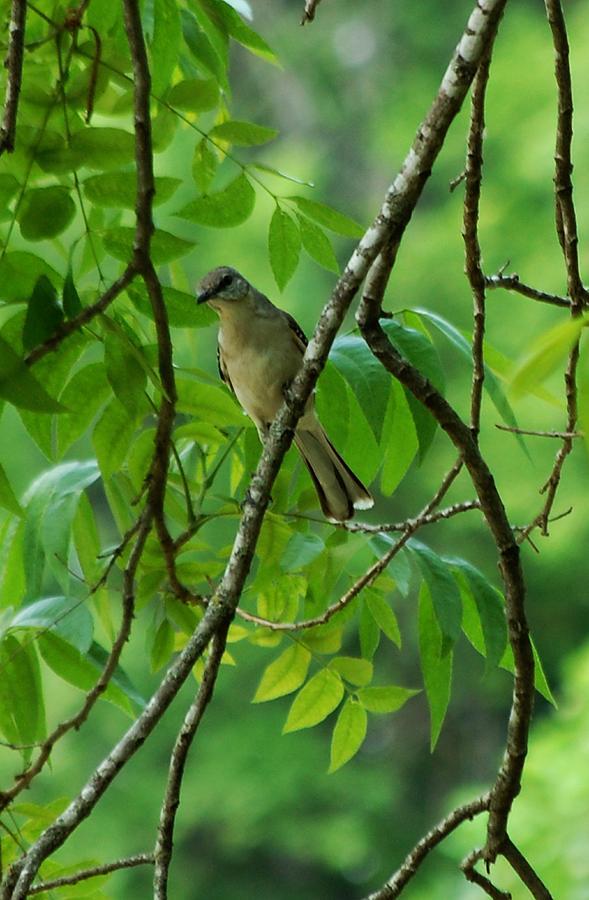 Bird Photograph - You Looking At Me by David Lane