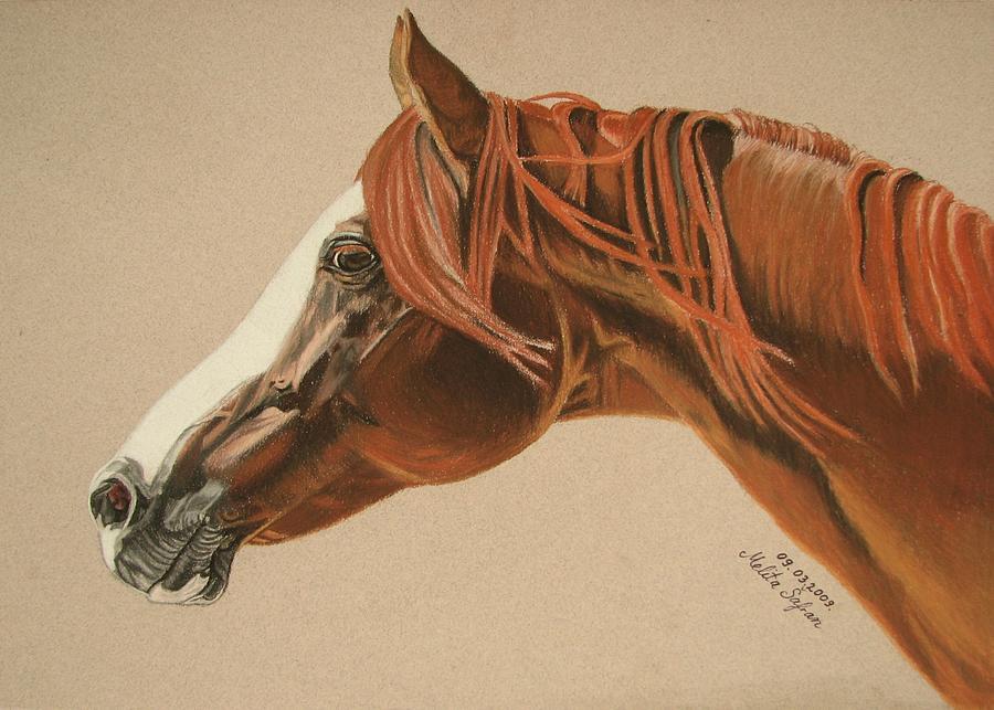 Horse Pastel - Zarro by Melita Safran