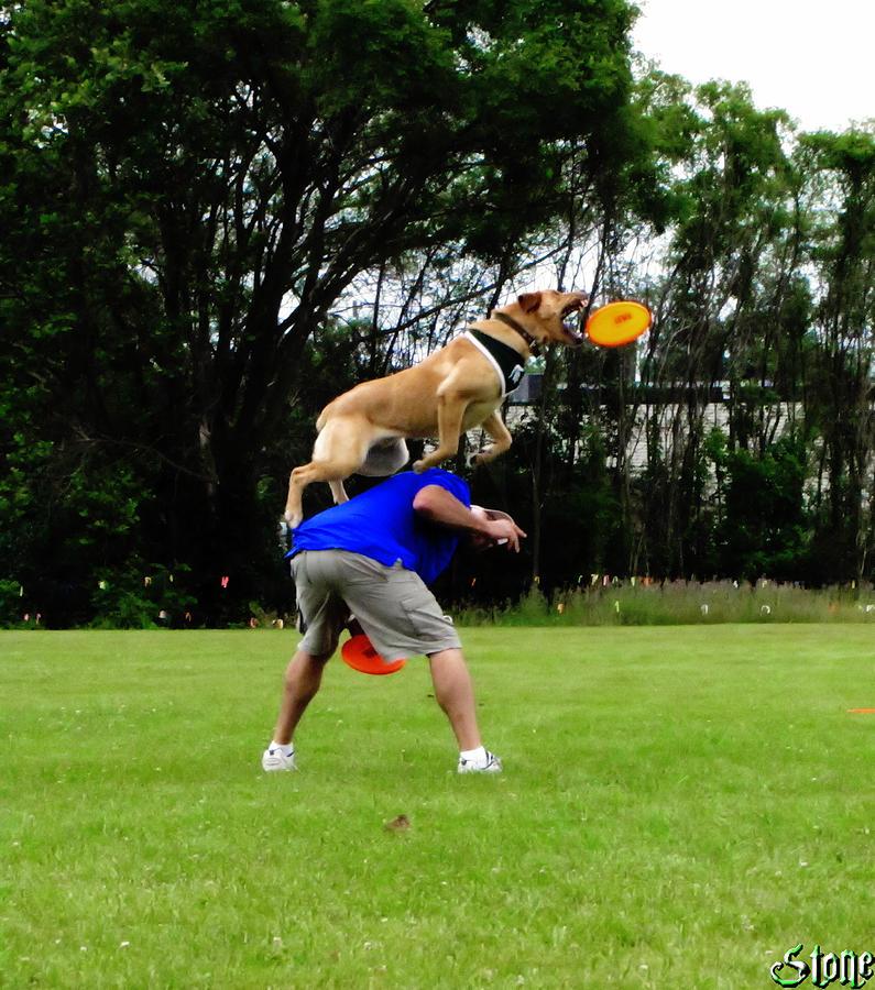 Zeke The Wonder Dog Photograph