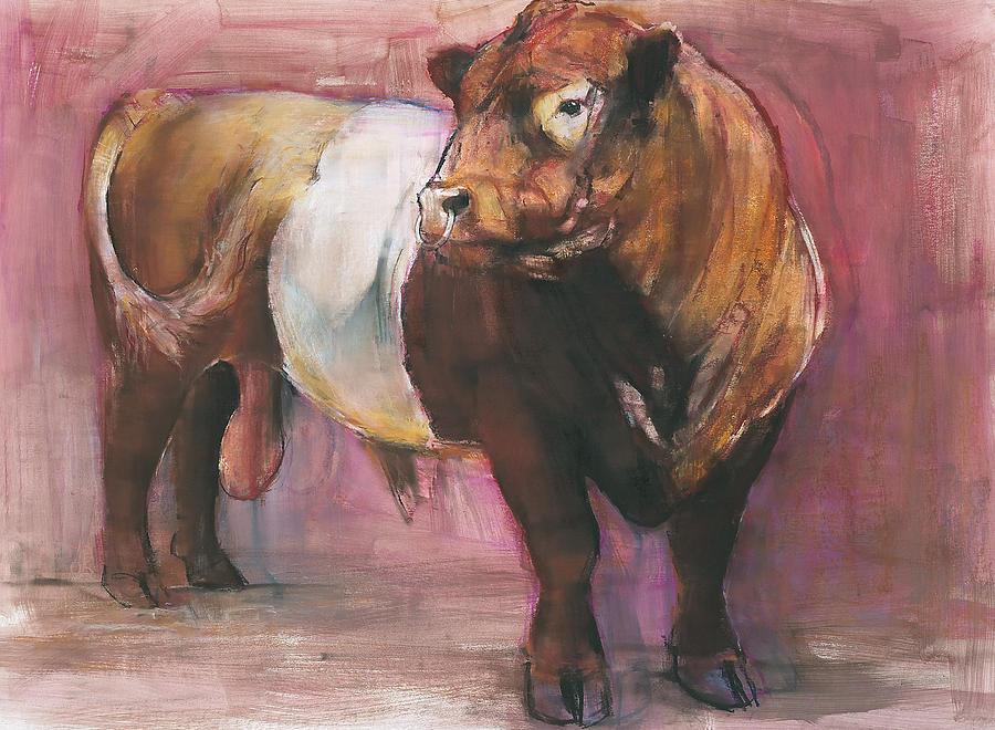 Zeus Bull Zeus Red Belted Galloway Bull
