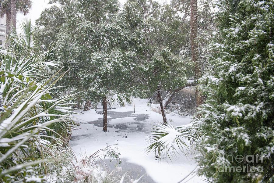 Charleston Snow Photograph