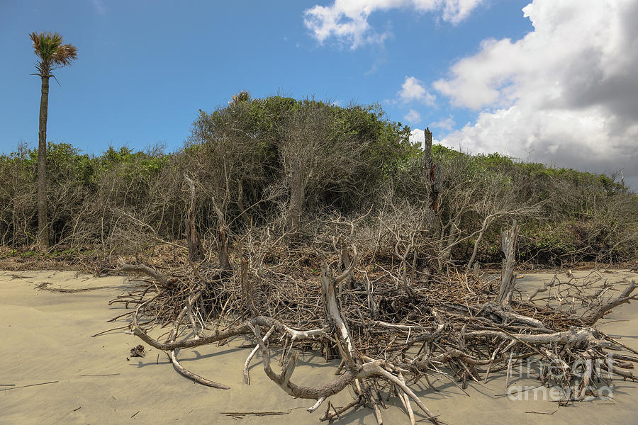Dead Wood Beach Photograph
