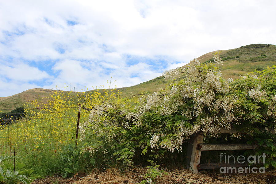 Hills And Flowers Photograph