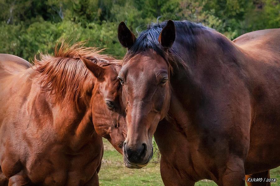 Horses On Pereau Rd Digital Art