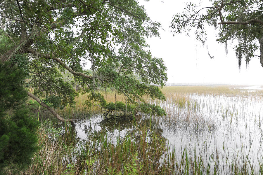 Lowcountry - Marsh Fog Photograph
