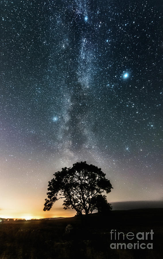 Milky Way And The Lonely Tree On The Limestone Pavement Photograph