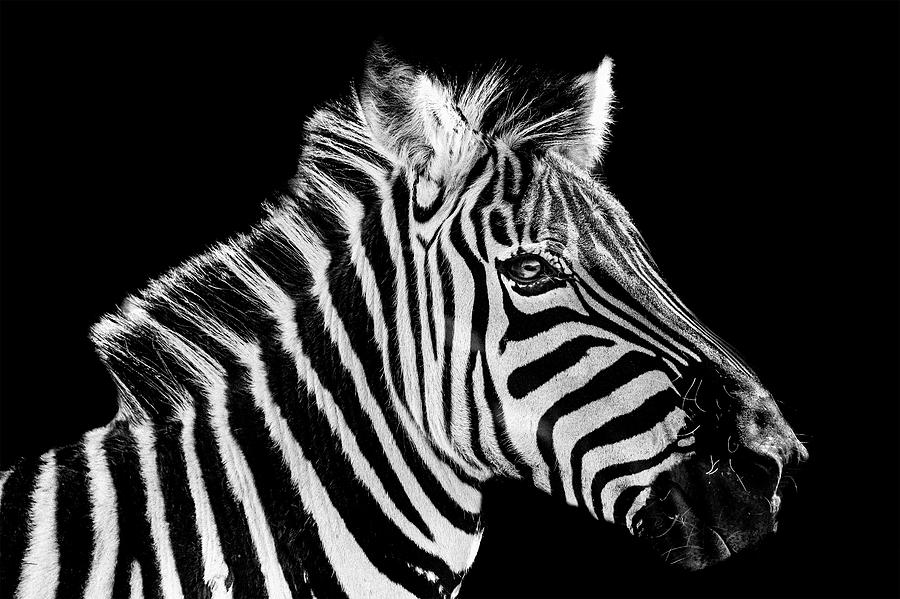All About The Stripes Photograph