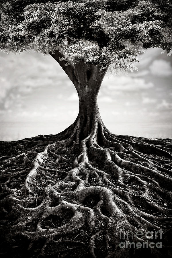 Back To The Roots Photograph