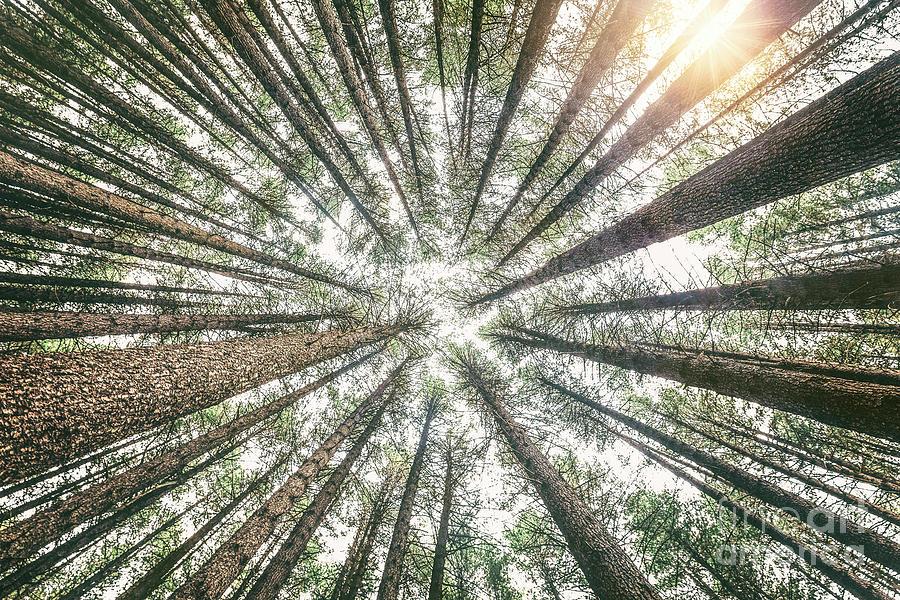 Below The Treetops Photograph