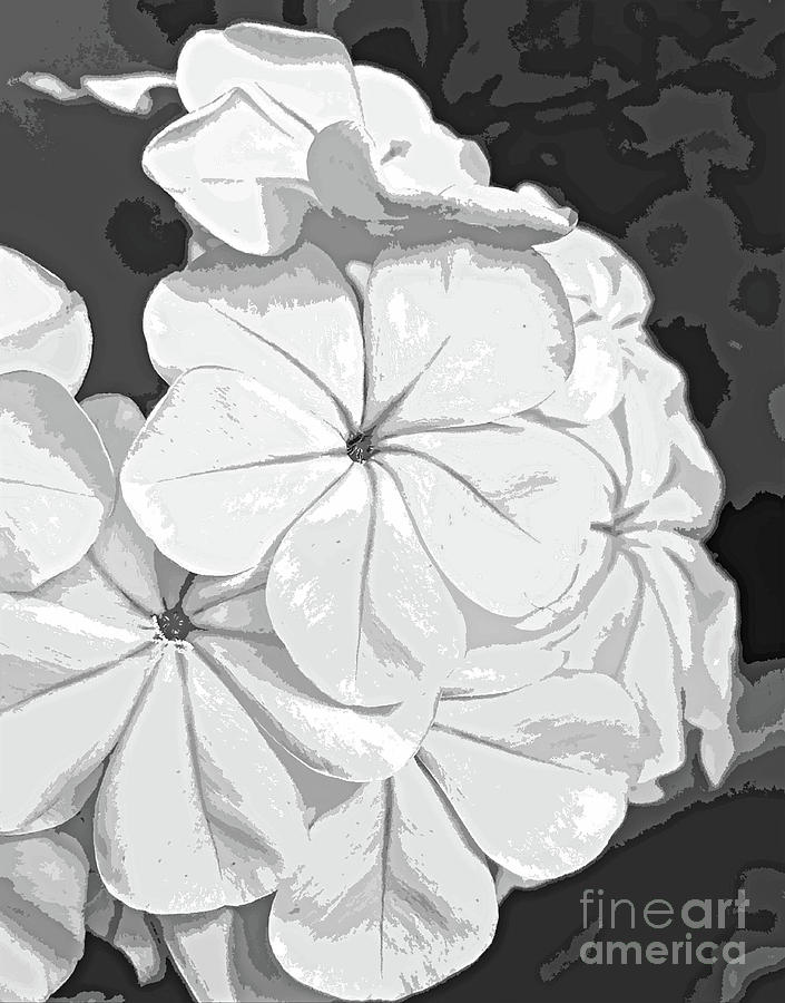 Black And White Blossom Abstract 300 Painting