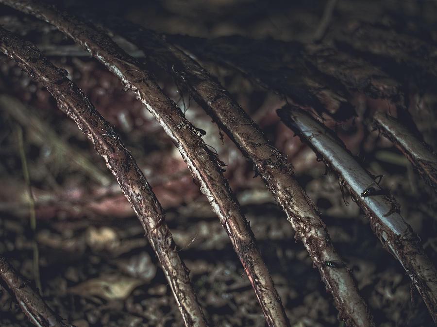 Broken Rotting Ribs Photograph