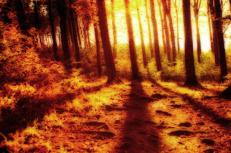 Burning Forest Photograph