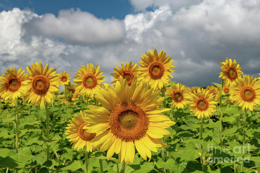 Bursting Forth Sunshine Photograph