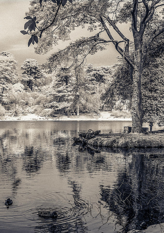 By The Lake Photograph