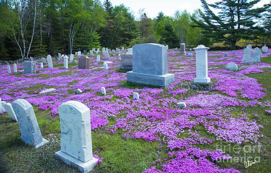 Cemetery Flowers Photograph