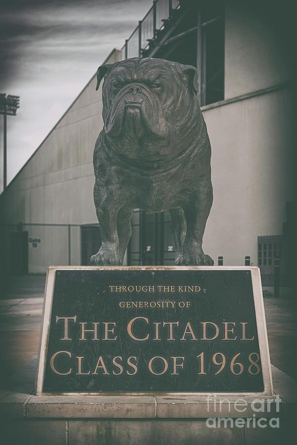 Citadel Mascot - Bulldog Photograph