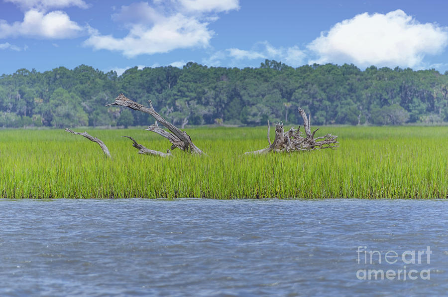 Cruising The Icw - Dead Wood Photograph