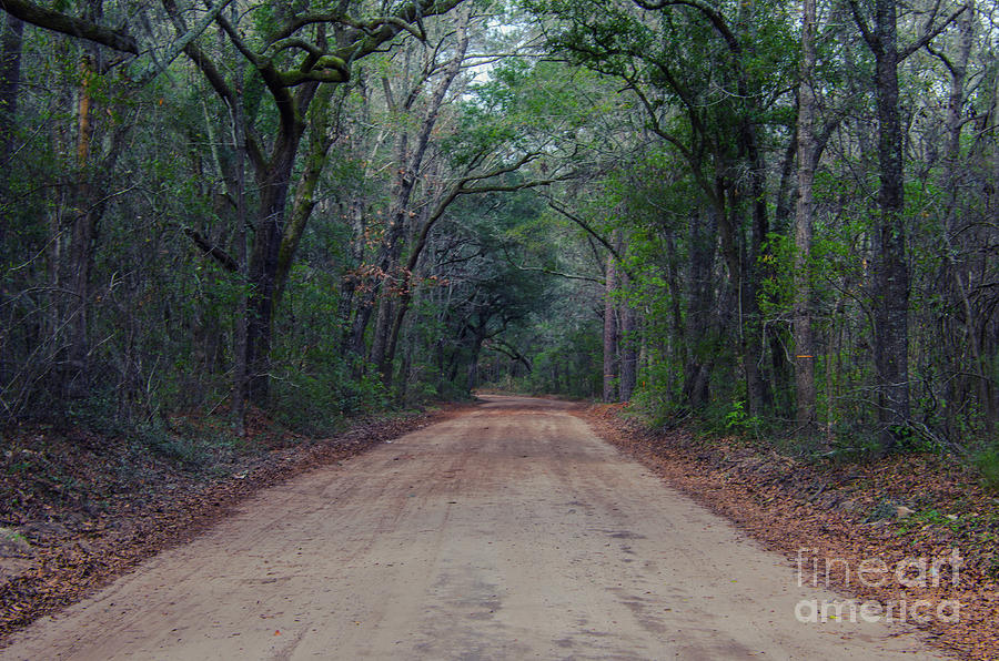 Dirt Road To The Angel Oak Tree In Charleston Photograph
