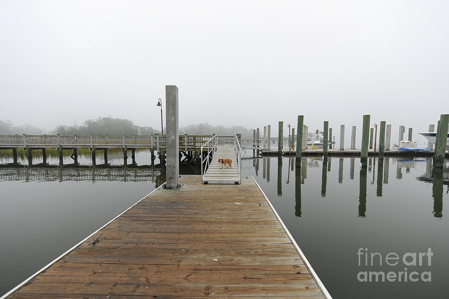Dockside Fog - Rivertowne On The Wando Photograph