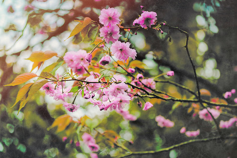 Dreaming Of Spring Photograph