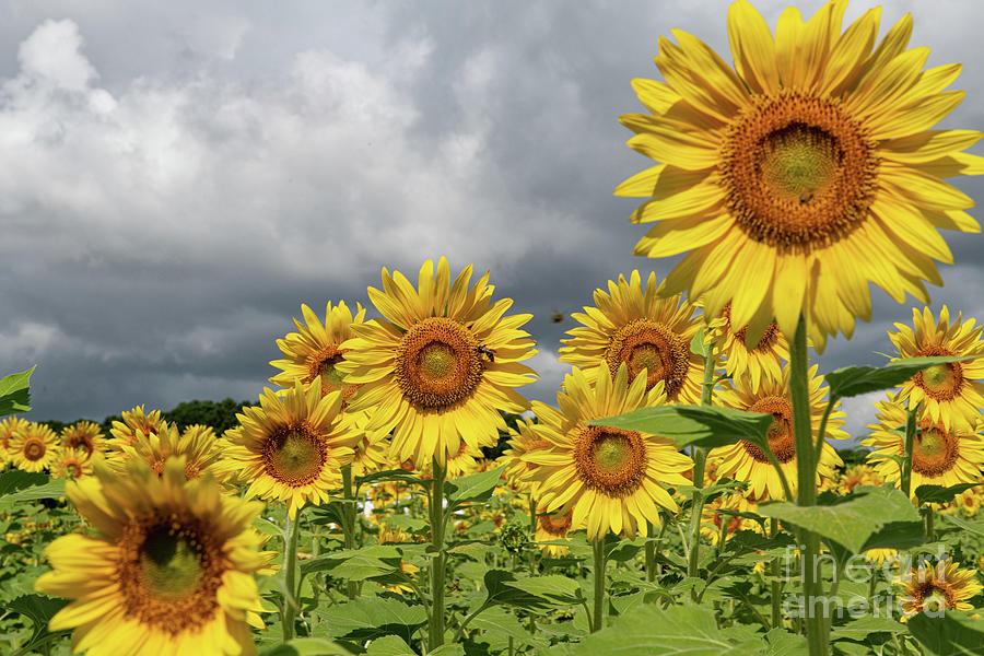 Dreaming Of Yellow Sunshine Photograph