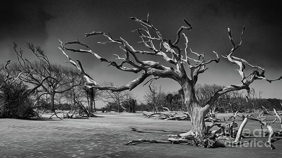 Driftwood Beach In Black And White Photograph