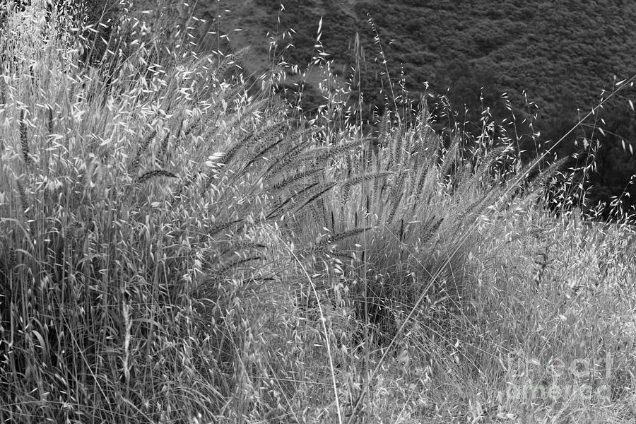 Dry Grass Photograph