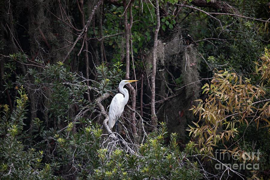 Egret Perch - Lowcountry Marsh Photograph