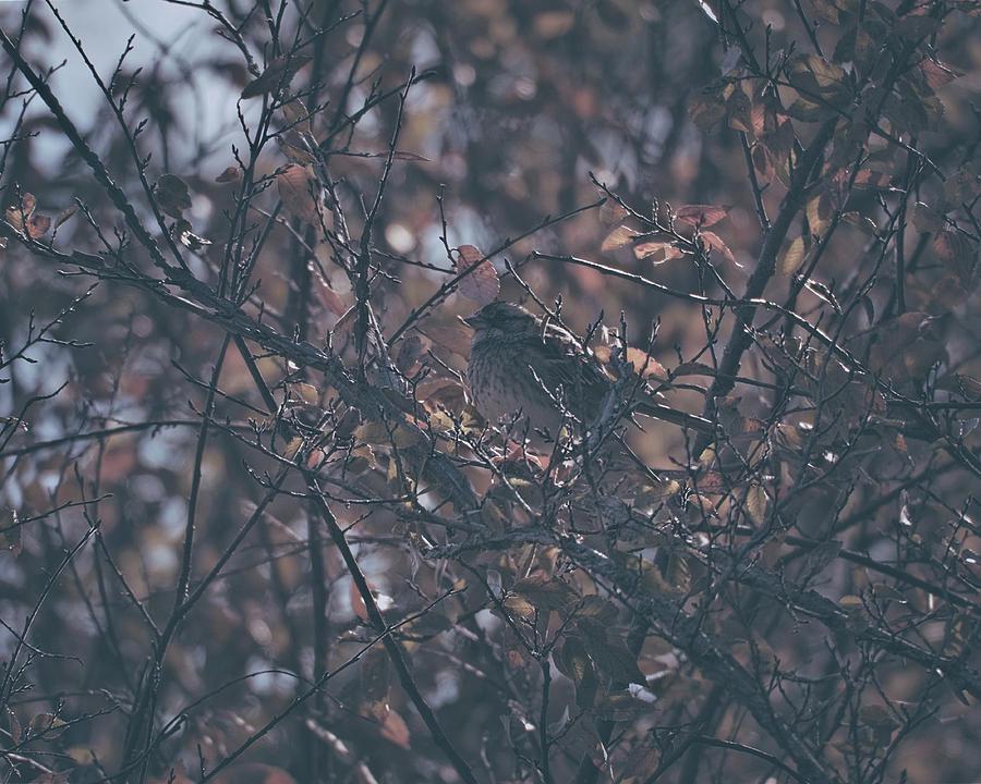 Enjoy The Morning 20181116 Photograph