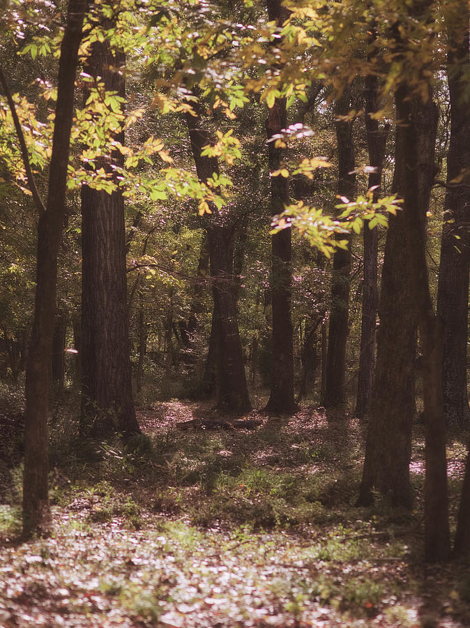 Fall In The Woods. Photograph