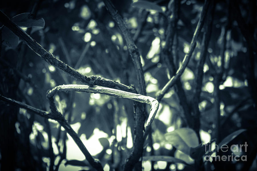 Filtered Branches Photograph