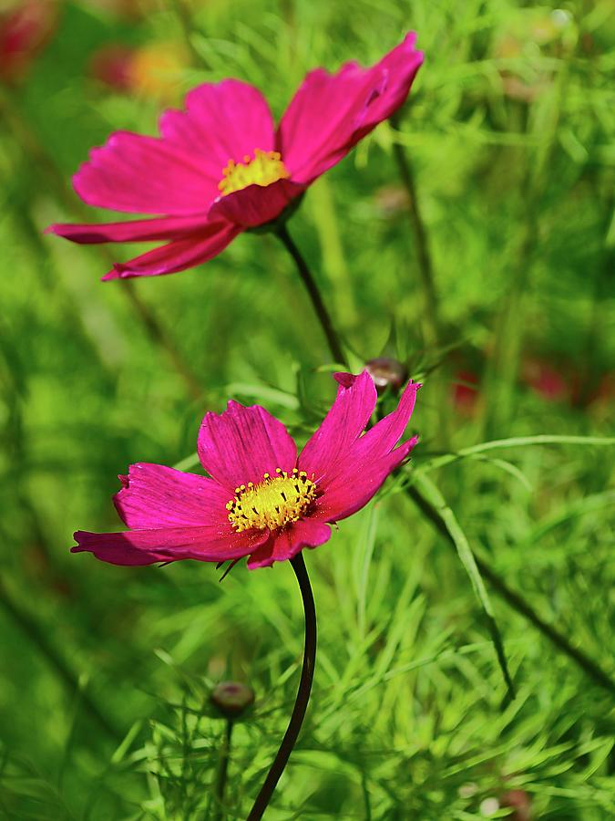 Flowers In The Gardens At Scone Palace Photograph
