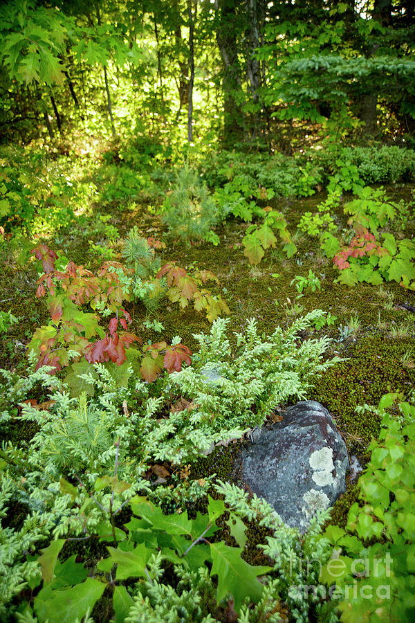 Forest Moss Photograph