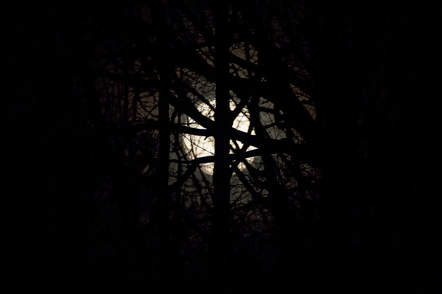 Full Moon Between The Trees Photograph